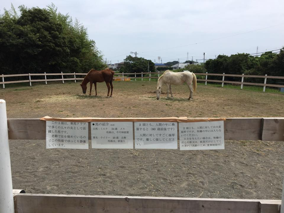 飼い主さんのご好意で、#堀野新田 に、馬やヤギとふれあいができるところが♡