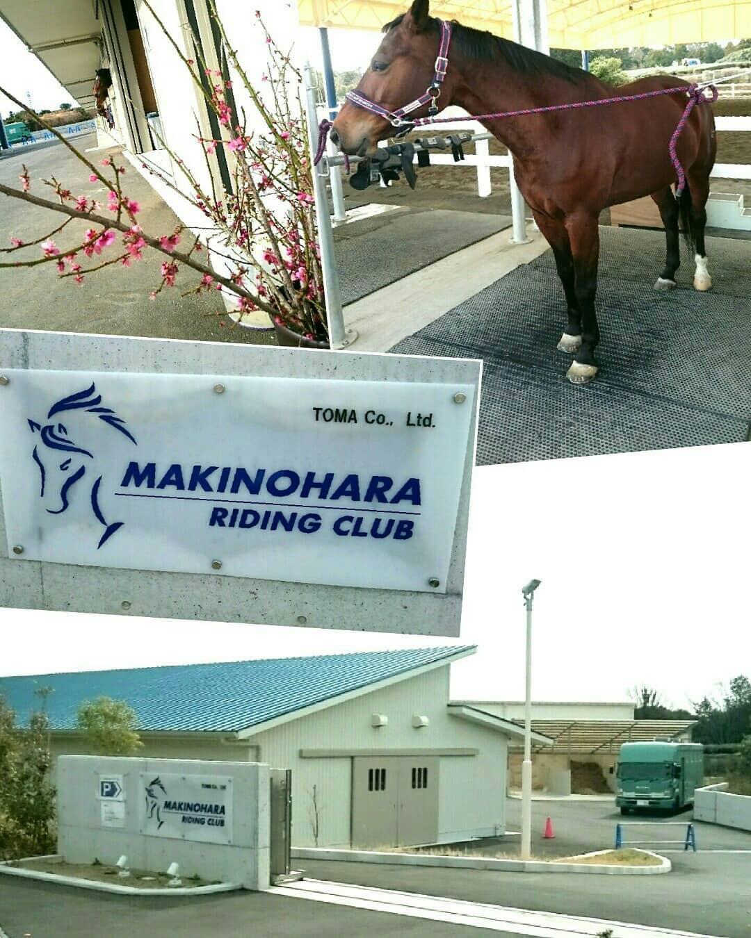 知ってますか⁉牧之原市で馬に会えるところ