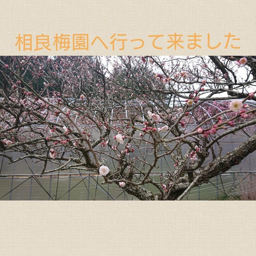 ☆梅のきれいな季節はお散歩へ