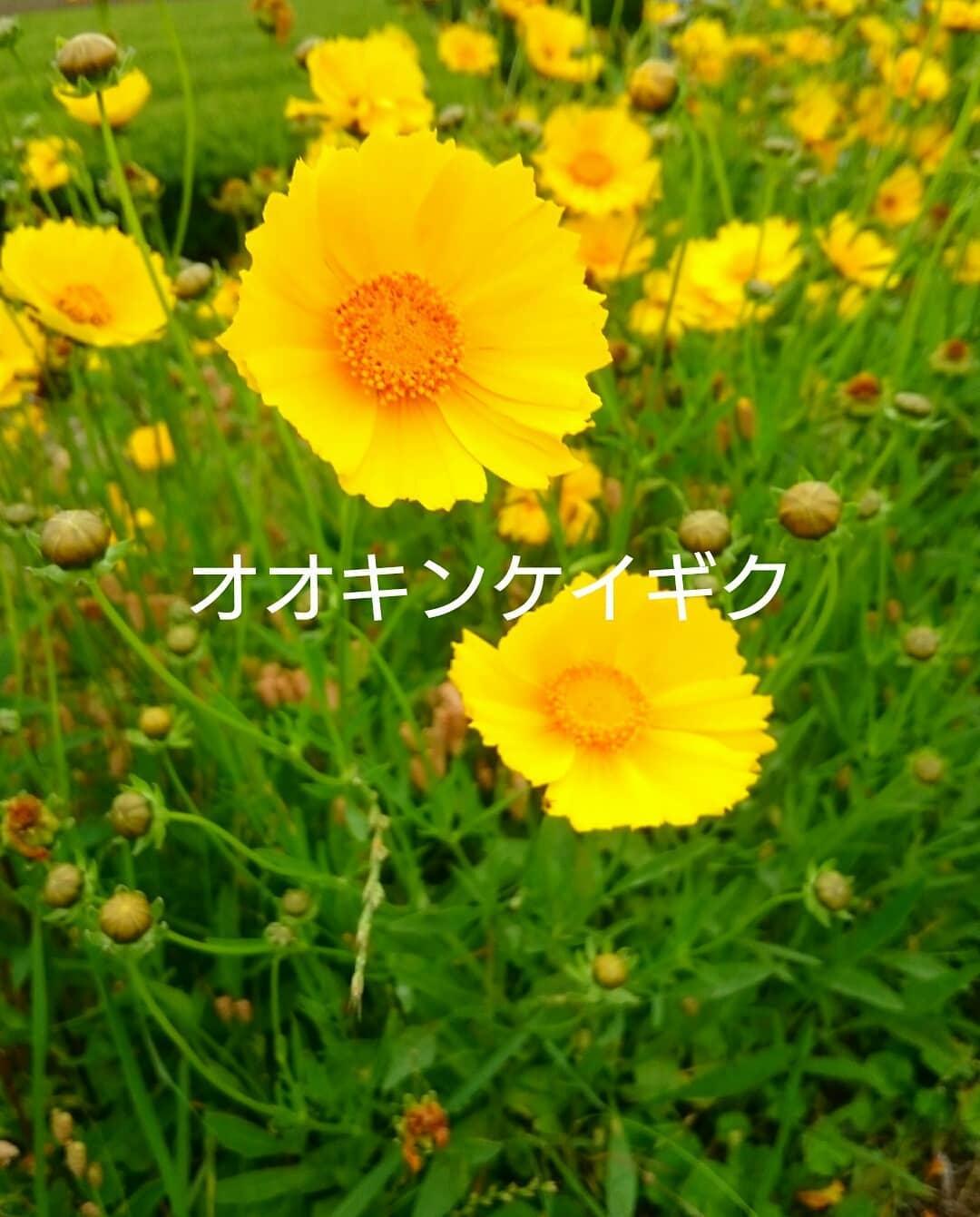 ☆キレイな花でもダメなんです!