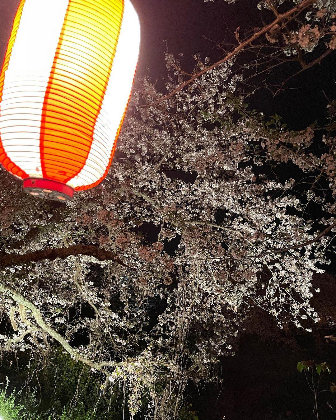 ☆勝間田川の桜が満開🌸